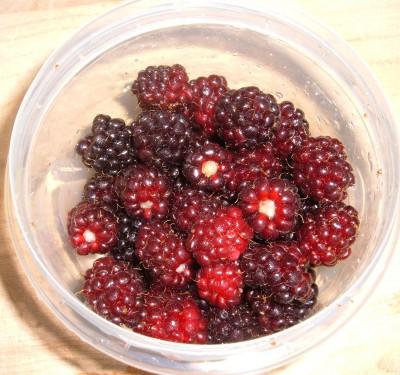 day 43 blackberries