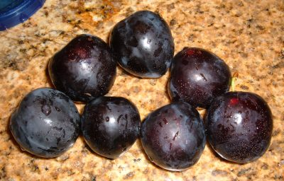 plum foraging