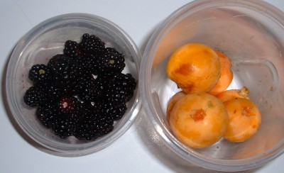 blackberry and loquat foraging