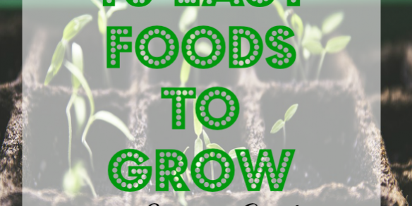 food to grow, summer garden, veggies to grow in a garden