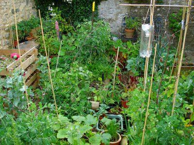 growing vetetables