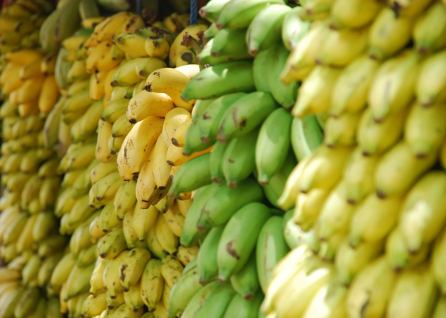 What to Buy at Trader Joe's: Bananas